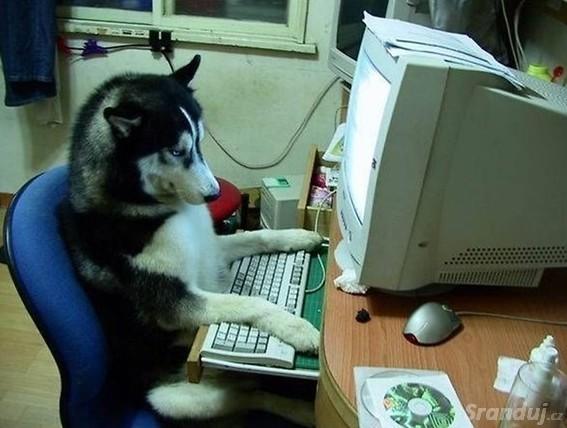 Pes surfující na internetu