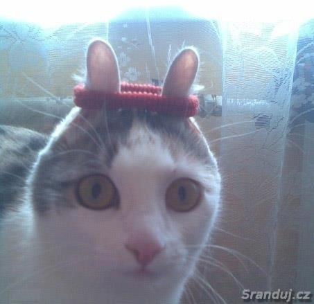 Kočkozajíc